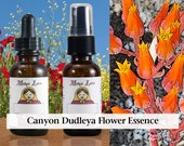 Canyon Dudleya Flower Essence, 1 oz Dropper or Spray for Groundedness and Emotional Balance Around Psychic Phenomena