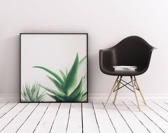 Succulent Print, Minimal Botanical Art, Gift for Gardener, Kitchen Wall Art - Succulents