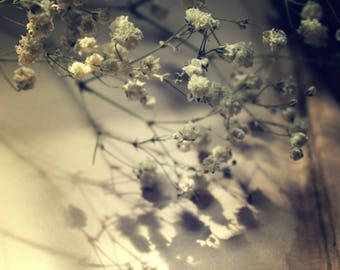 "Still Life Photography, Shadow, Botanical, Flower, Romantic, Wall Decor, Choice of Finishes, 8x10. ""Baby's Breath""."