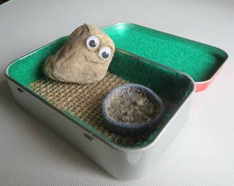 Real Pet Rock with natural expression with glasses and sandy food bowl in Altoid tin
