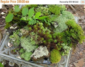 Save25% Moss of the Month Club-12 months of moss lichens and more -Wedding Gift-Birthday Gift