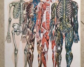 Antique Vintage Human Body Bingo Puzzle and Game Safari LTD. 1970s 1980s Paris France Miami Anatomy Biology Life Science Model School middle