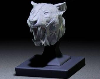 """Lion Anatomy Model open-mouth """"Roar"""" head"""