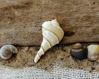 Vintage Trifari Cream and Gold Whelk Sea Shell Brooch ~ Large Vintage Trifari Collectible Pin