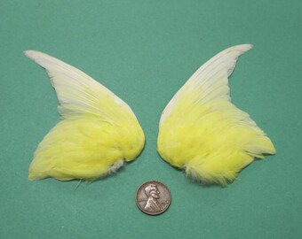 Pair of Yellow Fanned Wings Dried Birds Wings Feathers Art Craft Taxidermy Shipping Included