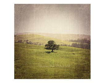 Lone Oak Tree in Field. Landscape Photography. Nature Photography. Rustic Home Decor. Vintage Style Photography. Green. Gray. Brown