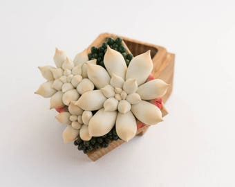 Ivory Green Succulent Ring Box Bearer Case Wood Round Decorated Engagement Ring Holder Proposal Ring Case Gift Home Decor Wedding