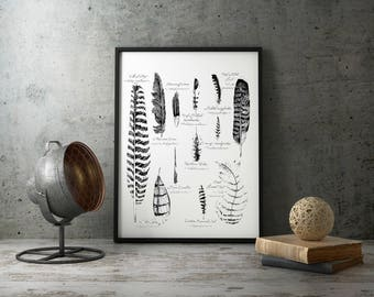 """Feathers Poster Print 