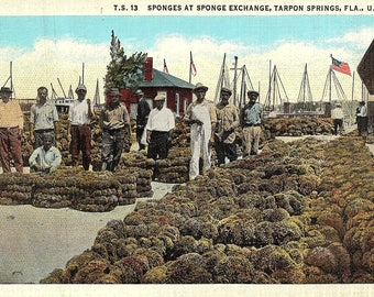 Tarpon Springs, Florida, Sponges, Sponge Exchange - Vintage Postcard - Postcard - Unused (P)