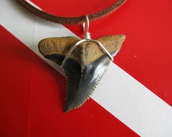 "Shark Tooth Necklace, RARE COLOR ""Snaggletooth"" Shark, Fossil Shark tooth, Venice-Fl., 20"" Suede cord, Silver plated wire, Free US Shipping!"