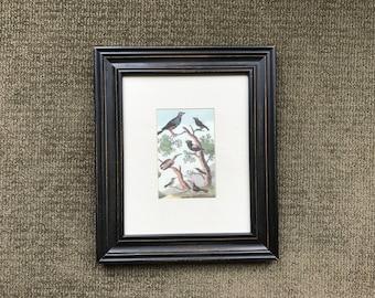Five Vintage Bird Prints in Frames - Instant Gallery Wall
