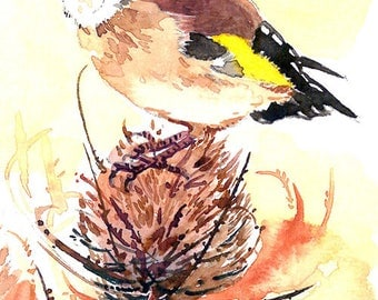 ACEO Limited Edition 1/25- Goldfinch on a teasel seed head, Cute bird art print of an original watercolor, Gift for bird lovers