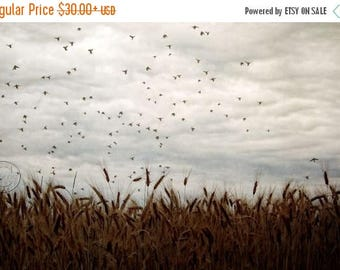 ON SALE Blackbird Flock, Flock of Blackbirds, Country Wheat Field, In the Country, Flying Birds, Photography, Wheat, Country Life