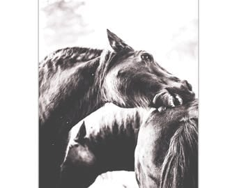 Contemporary Wall Art 'Horse Nibble' by Meirav Levy - Wildlife Decor Modern Horses Artwork on Metal or Plexiglass