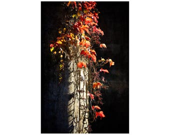 Red Leaves Photo, Autumn Colors, South of France, Silhouette, France Photography