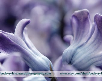 Hyacinth Flower Fine Art Photo Print
