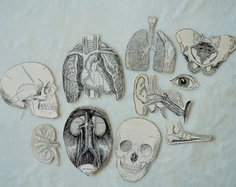 Black and White Anatomical, Anatomy Flake Stickers - Pack of 10