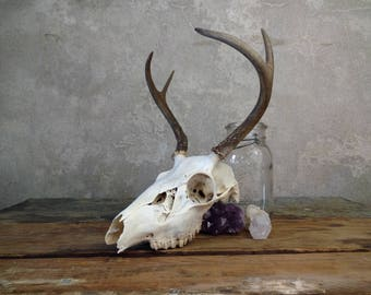 Small Deer Skull with Antlers, Home Decor Wall Hanging for Rustic House