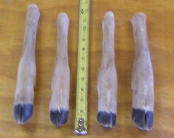 4 Preserved Straight Deer Legs