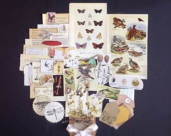 Unique Vintage biology / natural history ephemera and neutral collected paper pack