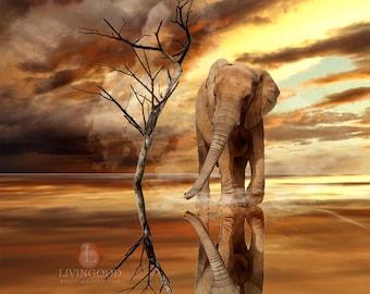 Livingood Photography Elephant