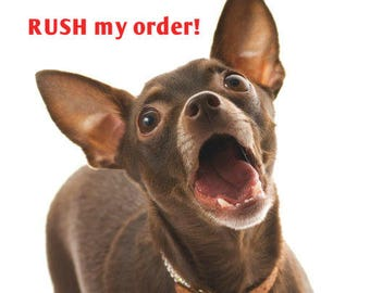 Top Dog RUSH Service