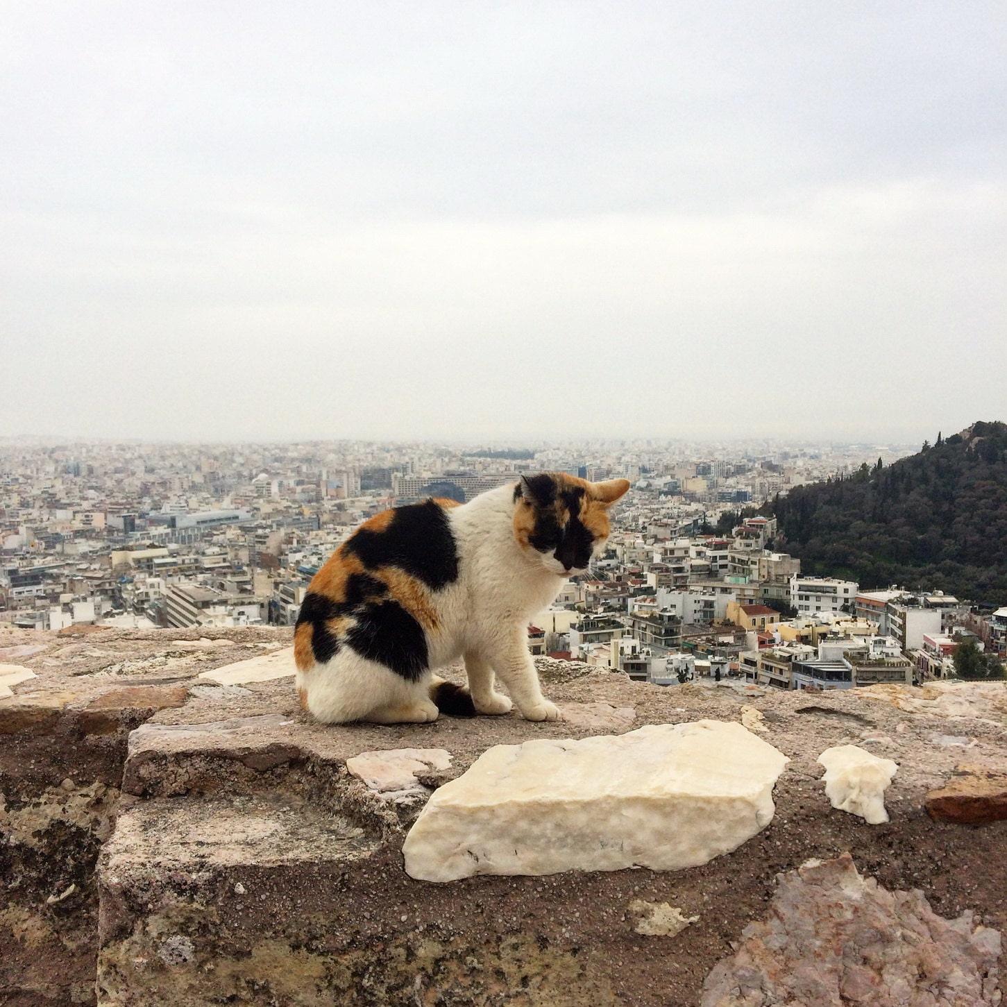 A cat on Acropolis