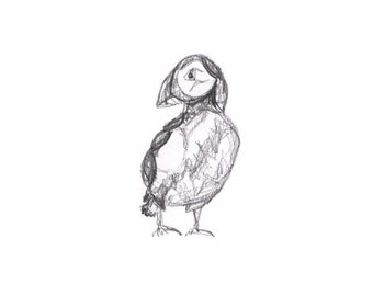 Puffin sketch drawing print
