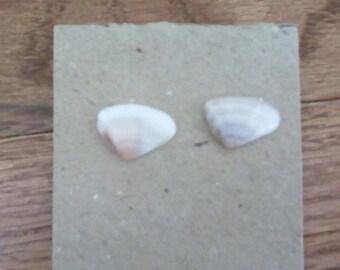 Seashell Studs
