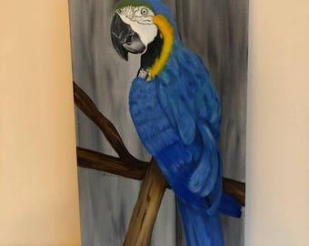 Blue Parrot 10 x 20 oil canvas