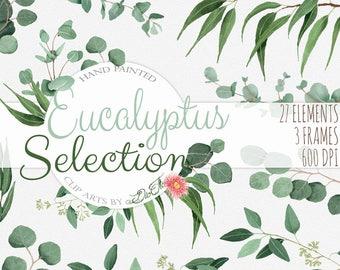 Watercolor Eucalyptus Clipart Greenery Clip Art Eucalyptus Greenery Baby Silver Dollar Leaf Green Leaves Illustration Vector Invitation Art