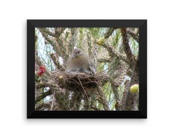 Framed poster- -Cactus Wren on her Nest