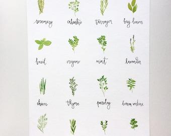 "Large Herb Chart Original Watercolor Painting [9"" x 12""]"
