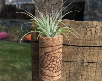 "1.75"" Tall Cork Magnet with Small Air Plant"