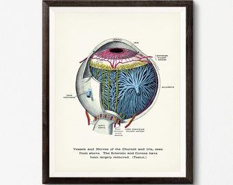 Human Eye Diagram, Digital Download, Optometrist Gift, Eye Anatomy Poster, Optometry Decor, Clinic Wall Art, Eye Diagram, Eye Ball Art