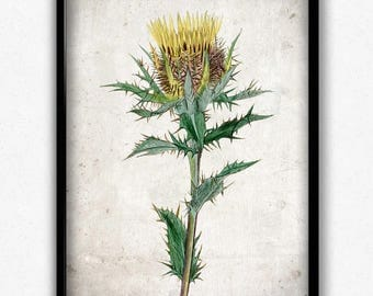 Yellow Thistle Vintage Print - Thistle Poster - Thistle Art - Thistle Picture - Home Decor - Home Art - Living Room - Living Room Art