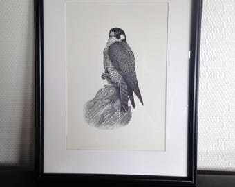print the tawny - Peregrine - Pierre Déom - 1970/80