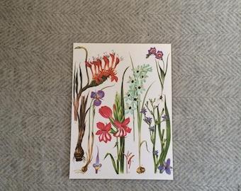 Genuine vintage large botanical drawing, bright flower illustration, botanical print, floral, green pink red tropical wall art gift