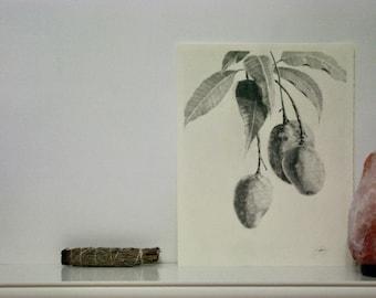 Mango Drawing, Original Drawing, Mango Illustration, Botanical Illustration, Botanical Art