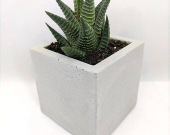Beton übertopf beton übertopf saftiges pflanzgefäß blumentopf set