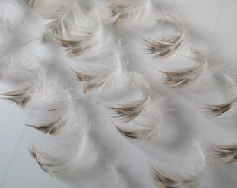 25 natural duck feathers