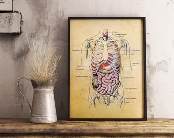 Human Body Vintage Print - Anatomy Illustration - Wall Decor - Printable Art - Instant Download