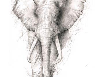Limited Edition Giclee Elephant Art Print