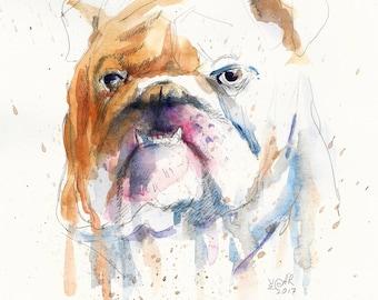English Bulldog. Sir #1