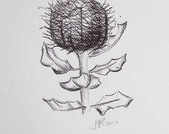 Scarlet Banksia in charcoal