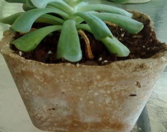 So it grows beauty....Succulent in concrete pot