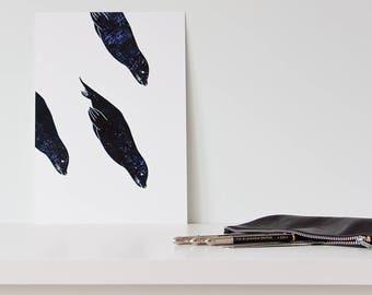 3 diving seals / print