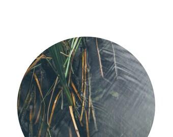 Reeds, Printable Art, Nature Photograph, Art Print, Nature Print, Nature Photography, Digital Download