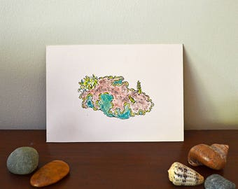 Nudibranch 5x7 Watercolor Painting on Archival Print - Glossodoris cincta - Sea Slug