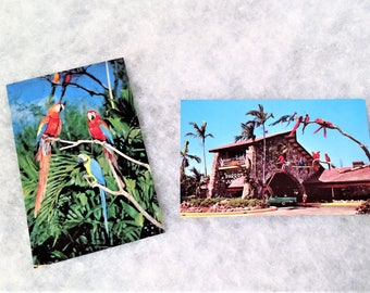 Two 1950s Vintage Parrot Jungle Miami Postcards with Macaws
